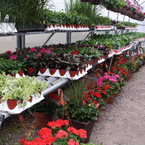 Redwood Falls Nursery Greenhouse
